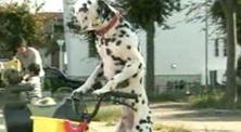 ドギーマン「紗」 <br>『自転車に乗って』篇
